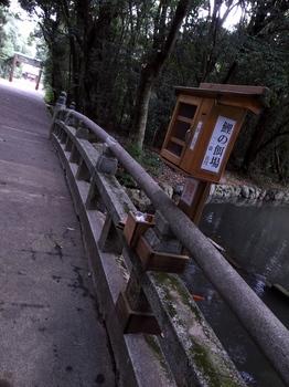 鯉の漁場←.jpg